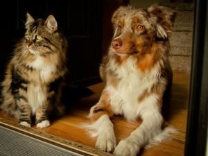 Thế giới - Chó và mèo, con nào yêu chủ hơn?