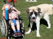 Bạn trẻ - Cuộc sống - Chuyện cảm động về cậu bé ngồi xe lăn và chú chó 3 chân