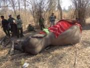 Tin tức trong ngày - Chú voi rừng Việt Nam khiến chuyên gia quốc tế xúc động