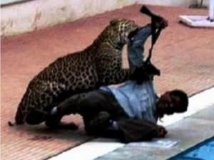 Thế giới - Ấn Độ: Bị báo gấm cắn xé, thoát chết nhờ ống nhòm