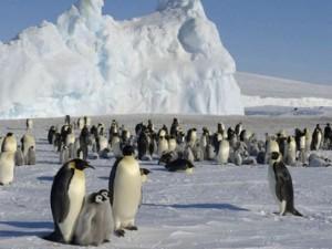 Thế giới - Khối băng khổng lồ giết chết 150.000 chim cánh cụt
