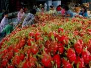 Thị trường - Tiêu dùng - Thanh Long xuất sang Trung Quốc có giá bao nhiêu?