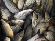 Sức khỏe đời sống - Ăn quá nhiều cá khi mang thai khiến bé dễ bị tiểu đường