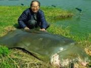 Bảo quản lâu dài xác rùa Hoàn Kiếm