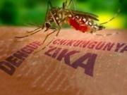 Sức khỏe đời sống - Thiết lập 8 điểm giám sát trọng điểm virus Zika tại khu vực phía Nam