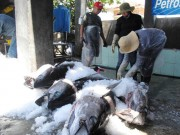 Thị trường - Tiêu dùng - Tư thương ép giá cá ngừ đại dương