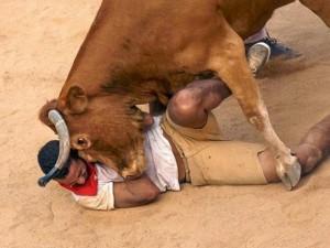 """Vì sao Tây Ban Nha không cấm lễ hội bò tót """"dã man""""?"""