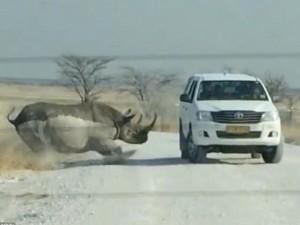 """Thế giới - Tê giác 1,4 tấn """"điên cuồng"""" húc vào ô tô du khách"""