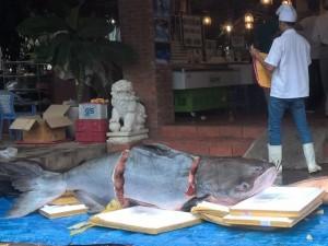 """Tin tức trong ngày - 4 con cá siêu khủng """"bơi"""" về Sài Gòn"""