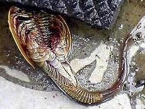 Phi thường - kỳ quặc - Phát hiện thủy quái 140 chân gây hoang mang