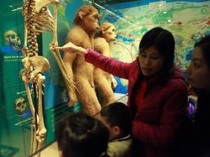 Tin tức trong ngày - Xem lịch sử sự sống qua 3,6 tỷ năm ở Bảo tàng Thiên nhiên