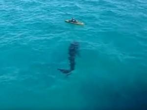 Thế giới - Video: Cá mập khổng lồ bơi sát người chèo thuyền
