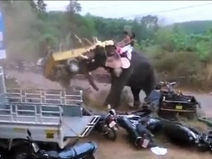 Thế giới - Video: Voi điên phá nát xe cộ như phá đồ chơi ở Ấn Độ