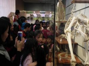 Tin tức trong ngày - Bảo tàng Thiên nhiên quá tải vì dân đến xem cụ rùa