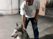 """An ninh Xã hội - """"Hiệp sĩ"""" bắt nghi can trộm chó cưng giá 20 triệu đồng"""