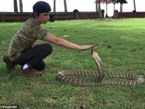 Thế giới - Cậu bé 12 tuổi mạo hiểm sờ đầu rắn độc có thể giết voi