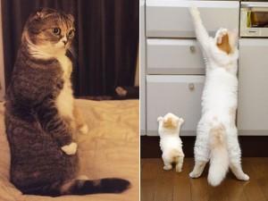 Bạn trẻ - Cuộc sống - Clip: Mèo thông minh với những phản ứng giống người