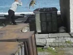 Thế giới - Nga: Ném chó vào gấu Bắc Cực để giải cứu cô gái trẻ