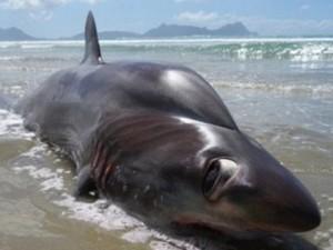 """Thế giới - """"Thủy quái"""" mắt to bằng cái đĩa dạt bờ biển New Zealand"""