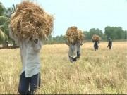 Thị trường - Tiêu dùng - Đồng Nai: Xâm nhập mặn đe dọa hàng nghìn hecta cây trồng