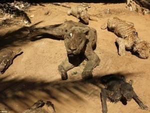 Thế giới - Động vật hóa xác ướp ở vườn thú dải Gaza