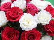 Thị trường - Tiêu dùng - Khan hiếm hàng, giá hoa tươi tăng đột biến