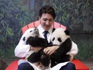 Thế giới - Thủ tướng Canada điển trai bồng bế gấu trúc cực đáng yêu