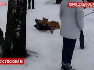 Thế giới - Video: Sư tử vồ bé 5 tuổi trên đường phố Nga