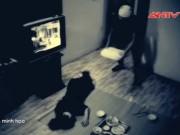 An ninh Xã hội - Vây bắt kẻ đốt nhà, đâm chị em thai phụ thương vong (P.Cuối)