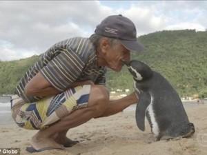 Thế giới - Chim cánh cụt bơi 8.000 km về thăm ân nhân