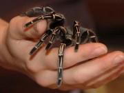 Sức khỏe đời sống - Triển vọng thuốc giảm đau giống nọc độc nhện
