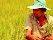 Thị trường - Tiêu dùng - Lo thiếu gạo, thủy sản xuất khẩu
