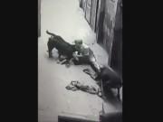 """Tin tức trong ngày - Video: Đàn chó dữ """"làm phản"""", lao vào cắn xé chủ nhân"""
