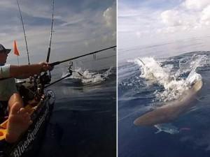 Thế giới - Video: Cá mập điên cuồng cướp cá của người câu