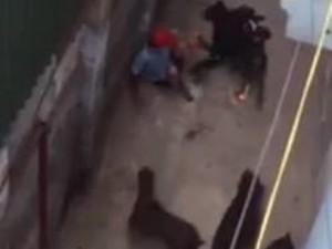 4 con chó Tây cắn người trên phố có bị tịch thu?