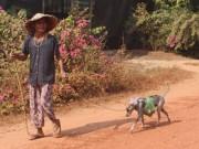 Tin tức Việt Nam - Cụ bà 80 tuổi luyện chó đi giao hàng