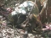 """Tin tức trong ngày - Thêm một con bò tót """"khủng"""" chết trong khu bảo tồn"""