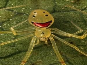 """Chuyện lạ - Những loài nhện """"biết cười"""" kỳ quặc nhất thế giới"""