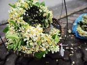 Du lịch - Hà Nội tháng 3- thành phố mùa hoa đẹp nhất miền Bắc