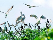 Du lịch - Dạo chơi vườn chim giữa lòng thành phố độc nhất VN