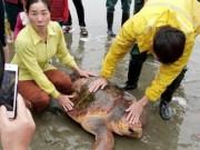 Tin tức trong ngày - Từ chối hàng trăm triệu, ngư dân thả rùa quý xuống biển
