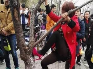 Bạn trẻ - Cuộc sống - Thiếu nữ TQ mặc váy ngắn leo cây chụp ảnh gây phẫn nộ