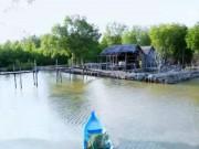 Du lịch - Ghé thăm xứ sở cây đước ở Cà Mau