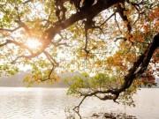Du lịch - Hà Nội tháng 3 vàng ruộm mùa lộc vừng thay lá