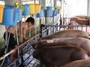 Thị trường - Tiêu dùng - Bắt quả tang bơm nước, tiêm thuốc an thần hơn 200 con heo