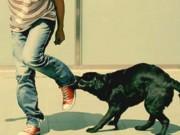 Tin tức trong ngày - Chó dại cắn 7 người, 1 người đã tử vong