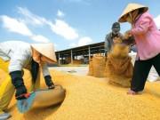 Thị trường - Tiêu dùng - Gạo Việt thua Lào, Campuchia, chỉ xuất đi... TQ