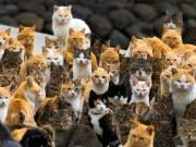 Du lịch - Thăm nơi mèo đông gấp 6 lần người ở Nhật Bản