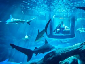 Thế giới - Cơ hội ngủ một đêm với... 35 cá mập ở Paris