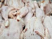 Thị trường - Tiêu dùng - 100% gà Trung Quốc nhập vào Việt Nam là trái phép